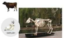 Mô hình động vật, thú y