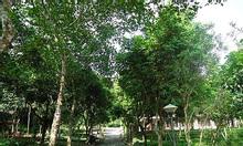 Bán dự án làng du lịch văn hóa Việt Mường Hòa Bình