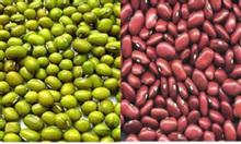 Cần mua đậu xanh, đậu đỏ số lượng lớn - 0912241923