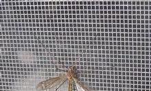 Cửa chống muỗi, cửa chống bọxit hút máu người
