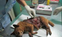 Phòng khám thú y Hà Nội, khám chữa chó mèo