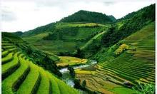 HP LandMark Lê Văn Lương, 0974569526