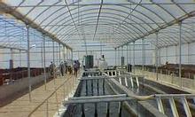 Nhà kính nuôi tôm, phơi gạch... Giá 120.000đ/m2