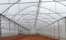 Nhà kính, nhà màng trồng dưa lưới giá 220.000đ/m2