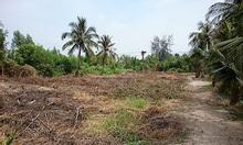 Cho thuê đất vườn giá rẻ Lê Minh Xuân, Bình Chánh