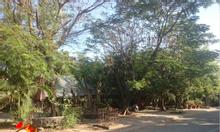 Thanh lý vườn cây phượng