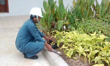 Chăm sóc cây cảnh, bảo dưỡng sân vườn