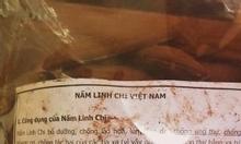 Nấm linh chi Việt Nam