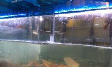 Siêu thị KB phân phối cá mú đỏ lớn nhất Hà Nội