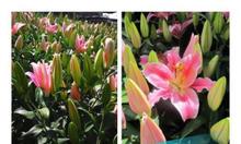 Lan hồ điệp và các loại hoa cắt cành