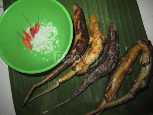 Rắn mối - đặc sản miền tây thịt thơm ngon bổ dưỡng