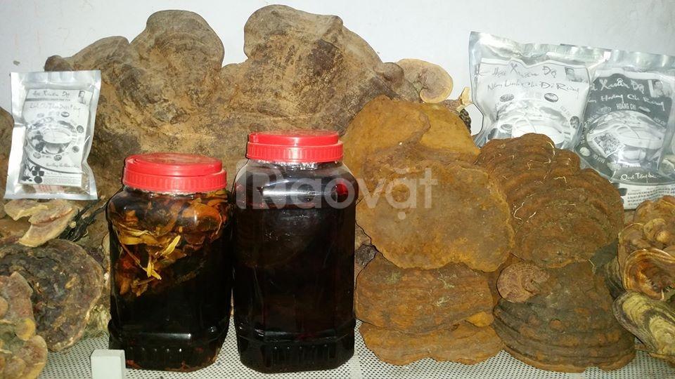 Nấm linh chi trắng rừng quý hiếm 450.000 VNĐ