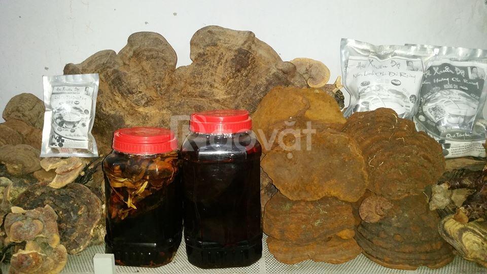 Nấm hắc chi rừng quý hiếm 0.5 kg giá sỉ 450.000 VNĐ