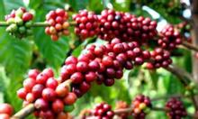 Cà phê BMT 12 cho ly cà phê đá thêm đậm đà