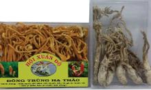 Bán sỉ nấm đông trùng hạ thảo và các loại nấm