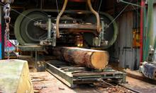 Cần thanh lý xưởng xẻ gỗ keo hiện đại