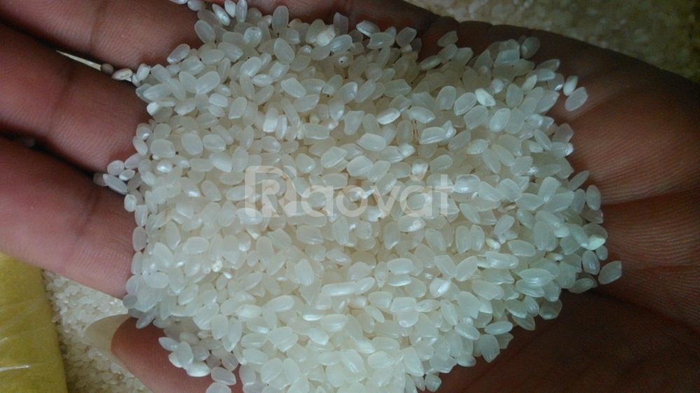 Gạo Nhật Japonica - Bán buôn, bán lẻ