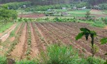 Bán đất nông nghiệp 14ha- U Minh, Cà Mau