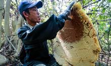 Mật ong Anh Khoa Gia Lai