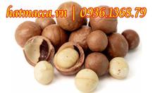 Hạt macca mua ở đâu tại Tp Nam Định