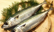 Cung cấp cá sapa Nhật hàng chất lượng cao, giá tốt
