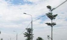 Thanh lý đất Bình Chánh đường tỉnh lộ 10, SHR, giá rẻ