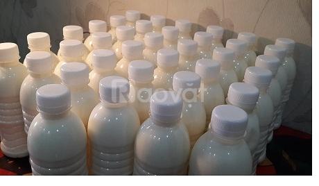 sữa chua tươi handmade