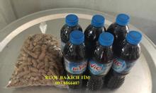 Ba kích tím Tiên Yên, Ba Chẽ, Quảng Ninh