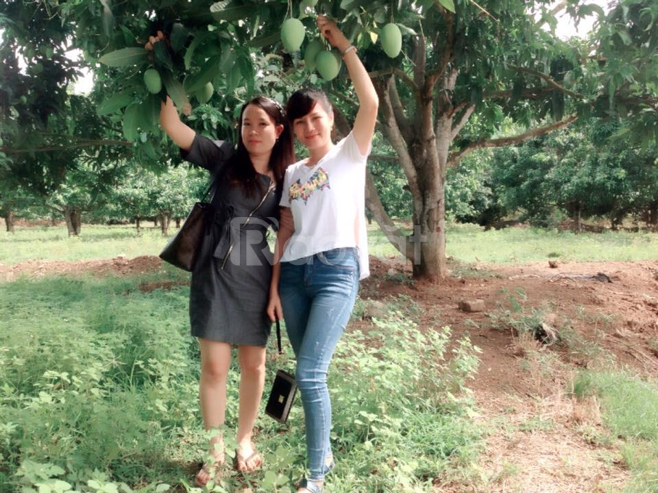 Bán hoặc cho Thuê đất tại Diên Khánh, Khánh Hoà