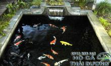 Địa điểm thiết kế hồ cá koi tại Đà Nẵng