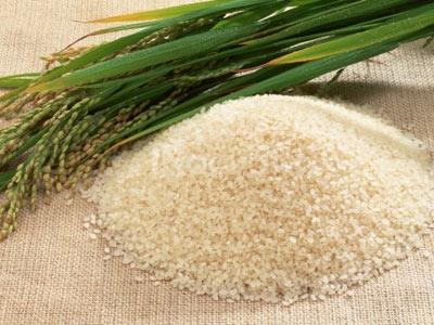 Tuyển lao động phổ thông - bán hàng gạo