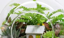 Nghệ thuật trồng cây trong bình thủy tinh