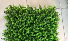 Cỏ nhựa, cỏ tấm treo tường tại Quảng Ninh