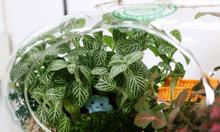 Tiểu Cảnh Cây Xanh Trong Lọ Thủy Tinh(terrarium)