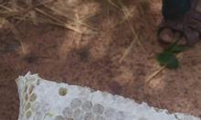 Mật ong rừng Tây Nguyên nguyên chất 100%