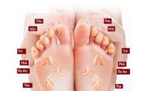 Máy massage chân và bắp chân NBF998C03 Nhật Bản