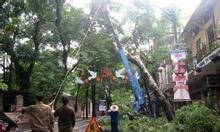 Dịch vụ chặt cây, cưa cây tại Hà Nội