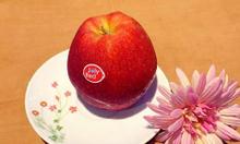 Cần tìm đại lý phân phối táo Hà Lan Joly Red