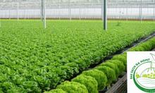 Cung cấp các sản phẩm rau sạch Đà Lạt