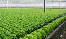 Nông trại  Đạ Nghịt cung cấp rau sạch toàn quốc