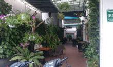 Vườn tường cây xanh tự động tưới ở Đà Nẵng