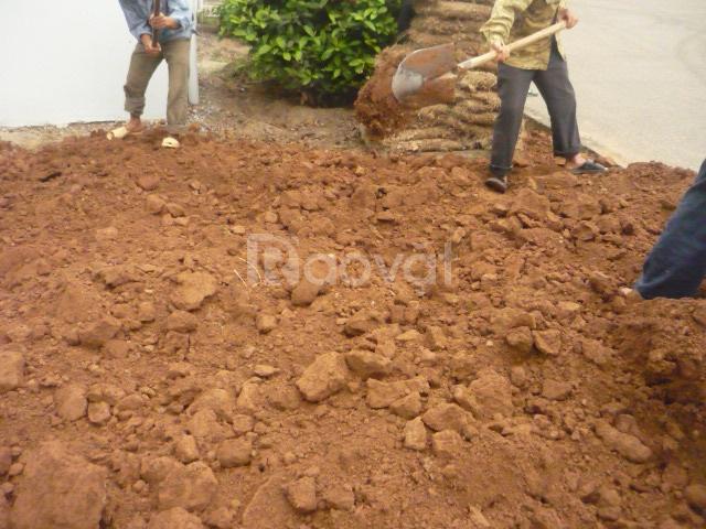 Bán đất phù sa tơi xốp trồng cây