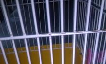 Phòng khám thú y Animal care 424 Thụy Khuê