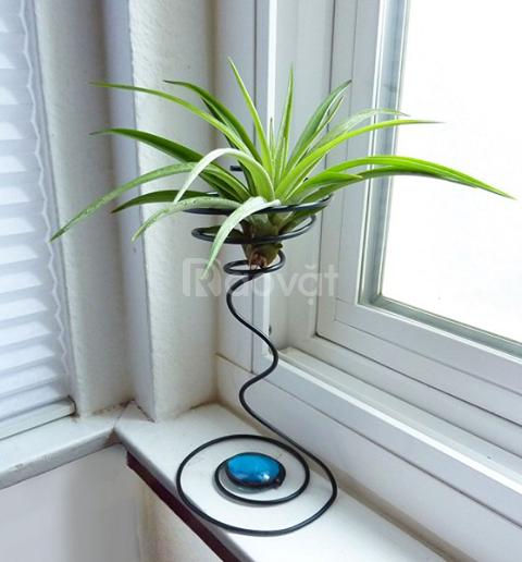 Thiên nhiên xanh trong nhà cùng cây không khí