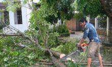 Dịchvụ cưa cây, chặt cây tránh mưa bão tại Hà nội