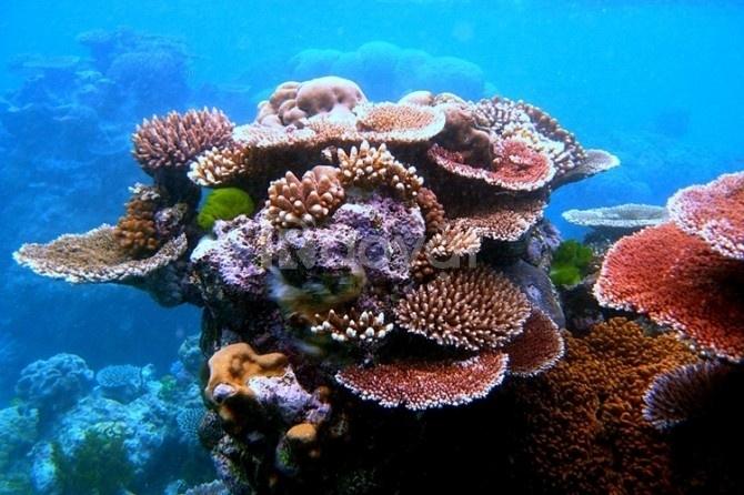 Du lịch đảo Hòn Khô - bãi Kỳ Co ở Quy Nhơn