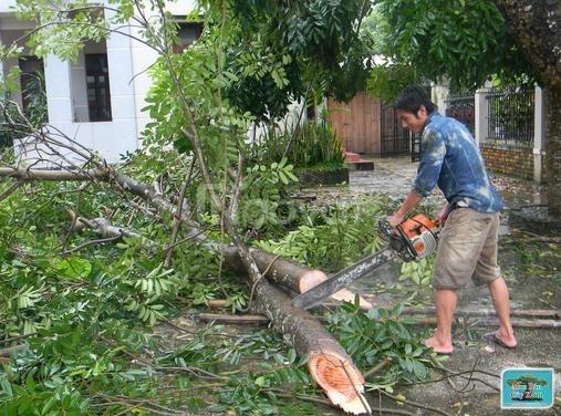 Chuyên cắt cây, tỉa cành, chặt cây tránh mưa bão