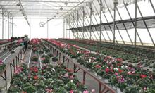 Tuyển 10 nữ Trồng hoa trong nhà kính tại Nhật Bản