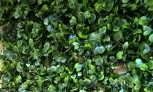 Tấm cỏ nhựa treo tường, tấm cỏ nhựa trang trí spa