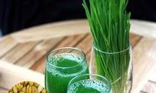 Lúa mạch đối với sức khỏe